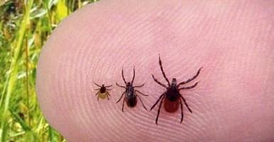 ticks | Search Results | The Mommy Illuminati
